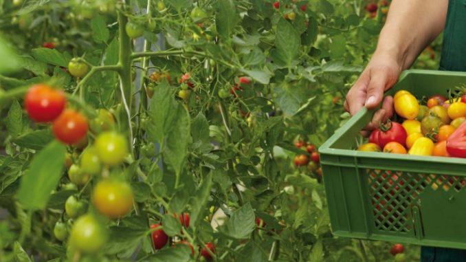 productos agrícolas